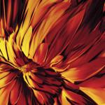 Abstract art: flower
